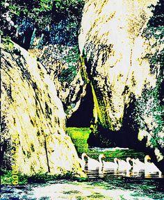 Swans Stone