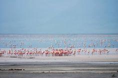 Flamingos Lake Manyara National Park #Tanzania
