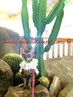 Coco, the Couture Cat: Fashion Friday, #BlogPaws Style! Pet Fashion, Fashion Show, Cat Walk, Cactus Plants, Fundraising, Friday, Couture, Cats, Pink