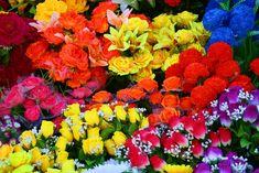 Guide des fleurs d'anniversaire selon les mois de l'année Delphinium, Poinsettia, Guide, Disney, Flowers, Month Flowers, Colorful Flowers, Bunch Of Flowers, Holidays