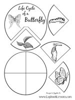 lap book for butterfly life cycle