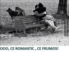 Lol, the dogs:) Latina, Laughed Until We Cried, Psy Art, Bad Romance, Funny Photos, Funny Animals, Cool Pictures, Hilarious, Black And White