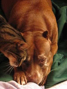 Cats and Dogs Living Together 2 by davemaxfine, via Flickr
