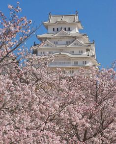 HimejiJapan Title: 迫り来るサクラさん<姫路城> Himeji Castle covered with cherry blossoms Unfortunately all my schedules for tomorrow have been canceled due to the weather. Spring weather is like a woman it has been unpredictable..º(  )º Anyway today was the best day to enjoy cherry blossoms in this season even if it was not in full bloom. #Himeji #himejicastle #japan #hyogo #サクラ #さくら #桜 #wonderfulearth #wonderfulplace #kings_alltags #姫路城 #cherryblossom #flower #castle #world_heritage #castle #姫路 #日本…