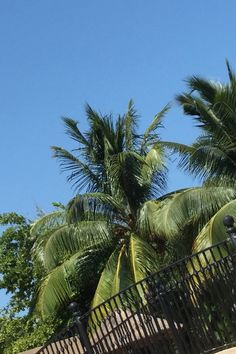 Palm trees are so photogenic