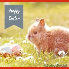 Hoppy Easter! I hope the Easter bunny was kind to you. *  *  *  #ᴇᴀsᴛᴇʀᴇɢɢs #happyeastersunday #bunny