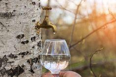 Sok z brzozy i jego niezwykłe właściwości Wine Decanter, Flute, White Wine, Alcoholic Drinks, Champagne, Tableware, Glass, Dinnerware, Drinkware