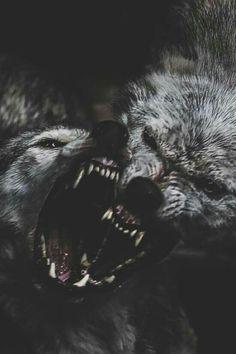 A volte si ha come l'impressione di essere governati dalla rabbia..