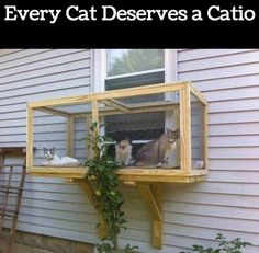 Screened Cat Porches The Best Ideas Plus Video Tutorial Screened Cat Window - DIY Catio Outdoor Cat Enclosure, Litter Box Enclosure, Reptile Enclosure, Screened In Patio, Outdoor Cats, Outdoor Box, Cat House Outdoor, Animal Projects, Cat Furniture