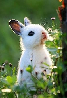 Cute little bunny....