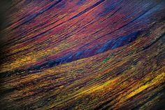 Tundra autumn, Wrangell-St. Elias National Park, Alaska, by #frans_lanting