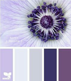 Design Seeds are color palettes created by designer Jessica Colaluca. Explore thousands of combinations to inspire your life's palette. Colour Pallette, Color Palate, Colour Schemes, Color Combos, Color Patterns, Purple Palette, Purple Hues, Design Seeds, Pantone