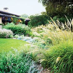 example of a heat tolerant garden -- grasses reflect the sun brilliantly. the whole landscape here seems to dance with light.