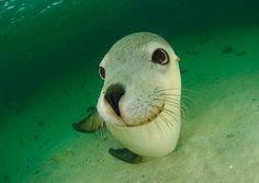Happy Sea Lion