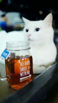 #well-behaved #cat