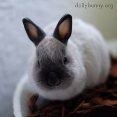 Bunny keeps cool by lying in ceramic plant pots - April 25, 2014