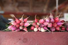 Prince Edward County: Farmers Markets, Honig & lokale Erzeugnisse Radieschen in allen Farben bei Hagerman Farms
