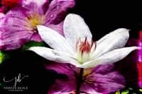 Pamela Beale Photography