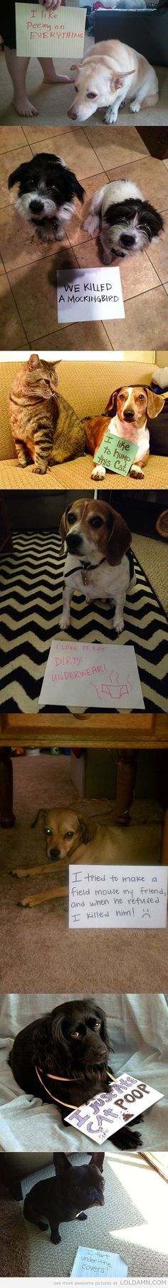 Dogs being shamed with signs