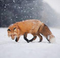 Hunt by © Iza Lyson