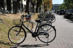Bicycles in Campus-Nagoya University