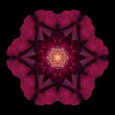 David Bookbinder flower mandala