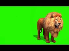 Lion Background, Green Background Video, Green Screen Video Backgrounds, Banner Background Hd, Blur Photo Background, Light Background Images, Background Images Wallpapers, Green Backgrounds, Invitation Background