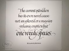 'The Sixth Extinction', Elizabeth Kolbert, Italic, Italic calligraphy, Italic script, human being, extinction. Chris Jordan, Cover Pics, Script, Quotations, Calligraphy, Lettering, Script Typeface, Drawing Letters, Qoutes
