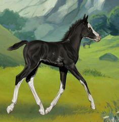 Arab csikó Horses, Animals, Animales, Animaux, Animal, Animais, Horse