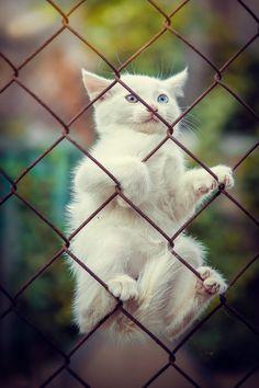 "mel-cat: ""By Yuriy Korotun """