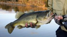 what-was-the-largest-largemouth-bass-ever-caught_2b3e8a6a-1588-4389-b117-5adb209b5389.jpg (1400×787)