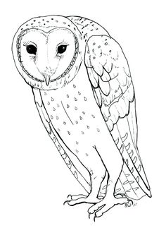 Snowy Owl Momentum wallpaper httpdeskbgcomview26043 bird