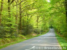 Afficher l'image d'origine Roman, Country Roads