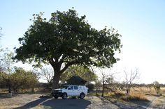 Self-drive in the Okavango Delta