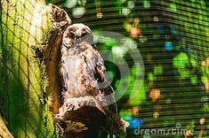 Photo about Owl on the background of the aviary grid. Image of aviary, wildlife, beak - 120642581 Grid, Wildlife, Owl, Animals, Image, Animales, Animaux, Owls, Animal