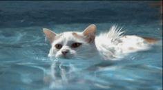 Katten kunnen zeewater drinken om gehydrateerd te blijven