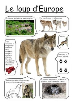 La Petite Taupe, French Phrases, Wolf, Petite Section, Montessori Materials, Research Projects, Kindergarten, Preschool, This Or That Questions
