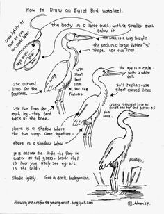 How To Draw An Egret Bird, Free Worksheet (How to Draw Worksheets for Young Artist) Drawing Prompt, Drawing Lessons, Drawing Techniques, Art Lessons, Drawing Artist, Drawing Sketches, Painting & Drawing, Sketching, Bird Drawings