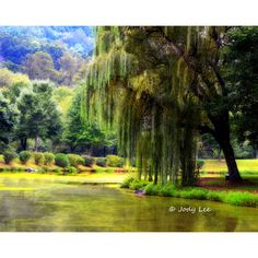 Landscape Photography, Peaceful, Wall Art, Weeping Willow, Pond, Park,... (€16) ❤ liked on Polyvore featuring home, home decor, wall art, mountain home decor, photography wall art, green home accessories, green wall art and green home decor