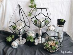 Флорариум геометрический формы капля купить в Москве на Avito — Объявления на сайте Avito