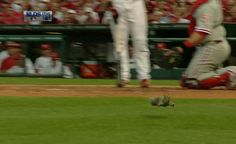 Rally Squirrel.
