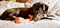 Great Dane Dog Guardian & his baby BFF