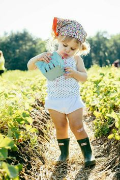 picking strawberries -  unable to resist tasting the fruits of your labor