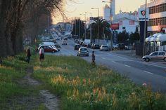 A Área Metropolitana do Porto já tem o documento que servirá de base para requalificação da Circunvalação. O relatório sugere passeios e ciclovias nos 17 Km da via.