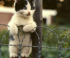 Cute Cats And Kittens Images Cute Things To Draw Easy Animals Pretty Cats, Beautiful Cats, Animals Beautiful, Cute Baby Animals, Animals And Pets, Funny Animals, Funniest Animals, Easy Animals, Cute Kittens