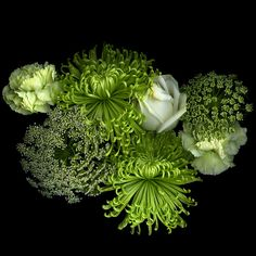 Фотография  THE GREAT GREEN & WHITE FINALE.... автор Magda Indigo на 500px