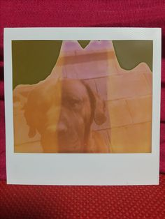 E/日 #polaroid #today #spectra #art #photo #miracle #tosa #tosainu #dog #ポラロイド #スペクトラ #10年目の奇跡 #写真 #アート #土佐犬 #犬 #写真を遊ぼう 😁
