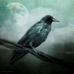 Surreal Gothic Raven Crow Moon Night Sky by PaintedTulipStudio