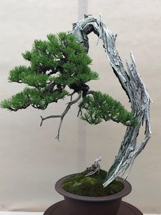 Bonsai Garden, Bonsai Trees, Plantas Bonsai, Garden Design, Plants, Pine, Gardens, Architecture, Nature