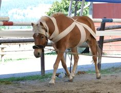 Everything you always wanted to know about TTouch Wraps for Horses and for Pets